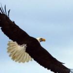 tamara eagle photo
