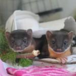 LT Weasels, June 2012, LL (4)