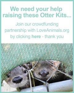 OtterWeb4