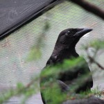 Crows HC Aug 2008 (7)