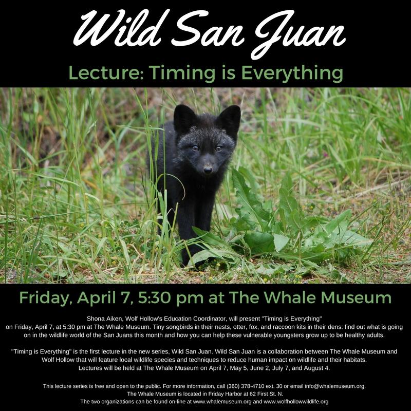 Wild San Juan WEB_ONLY